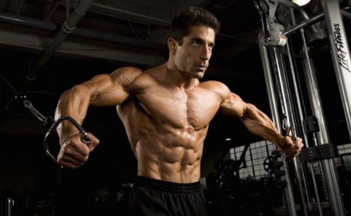 muscle building blogs