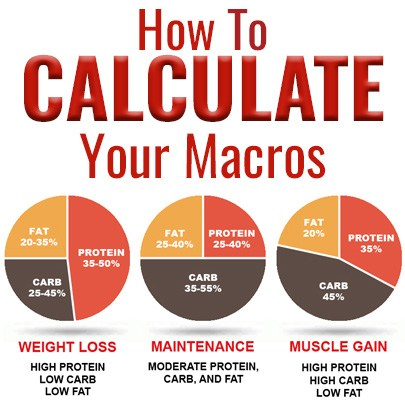 protein calculator for muscle gain