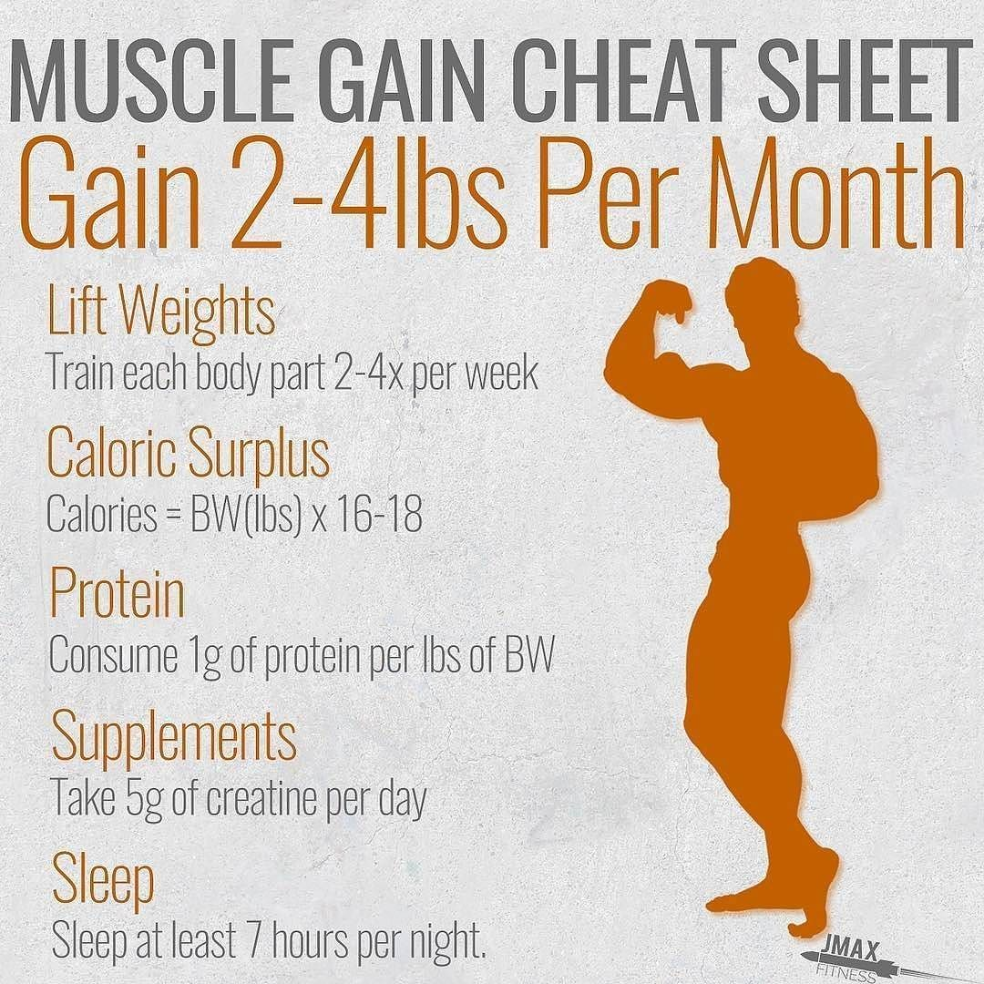 protein formula for muscle gain