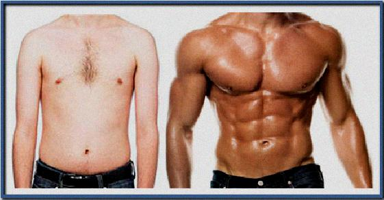 the body transformation blueprint